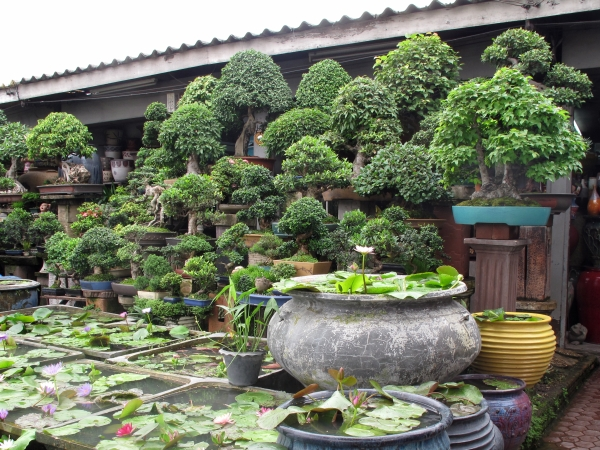 Bangkok Plant Amp Flower Market Bangkok For Visitors